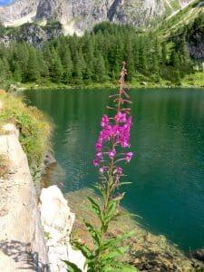 Auf zum Jägersee und Tappenkarsee - Zwei der schönsten Seen der Alpen blogHuette.at image 15