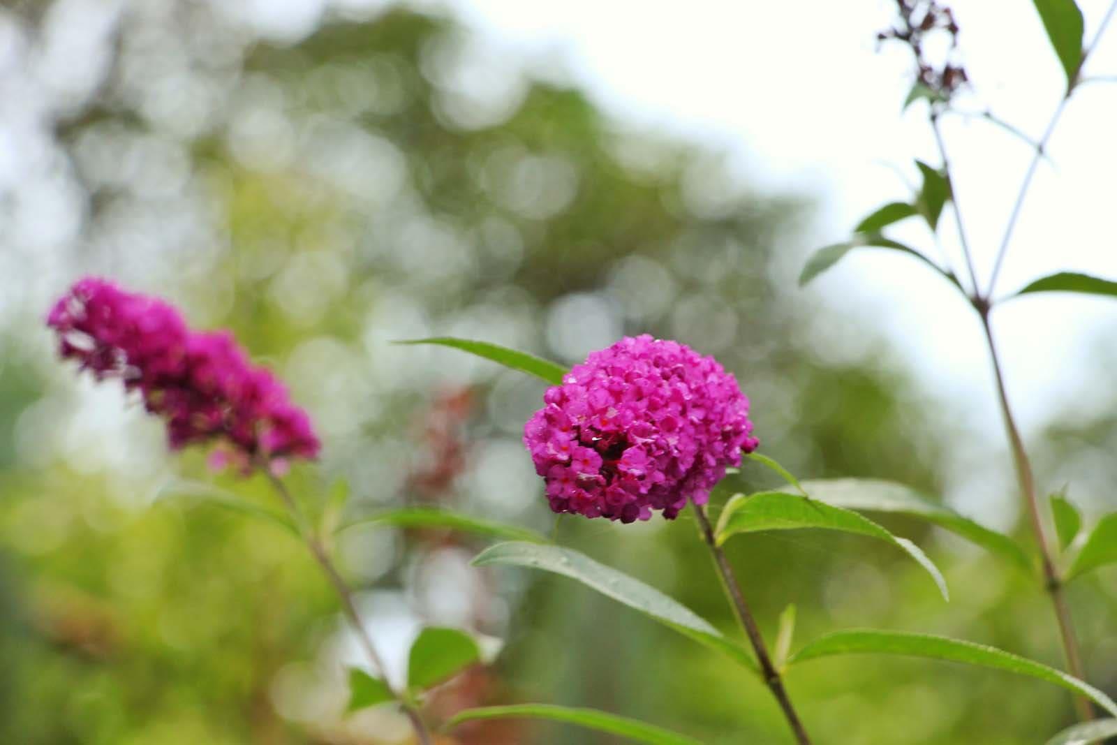Blumen am Wegesrand in Flachau