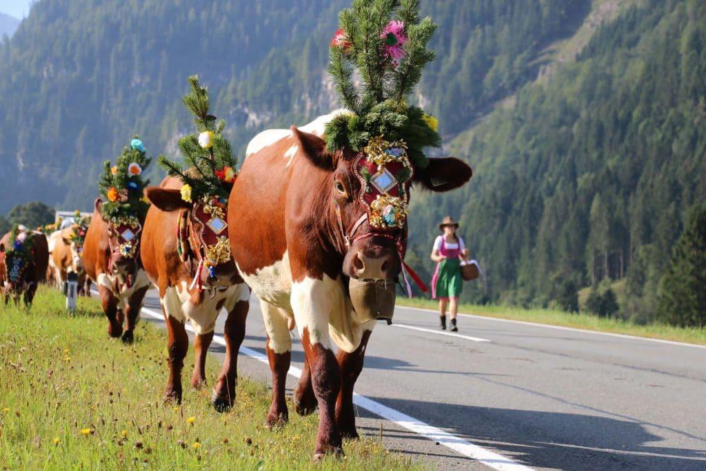Wenn der Herbst ins Land zieht – Almabtrieb in Radstadt » blogHuette.at