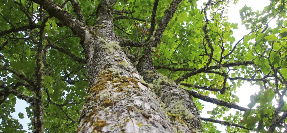 naturopathy of the trees