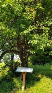 Die Kraft der Bäume als Heilkraft nutzen