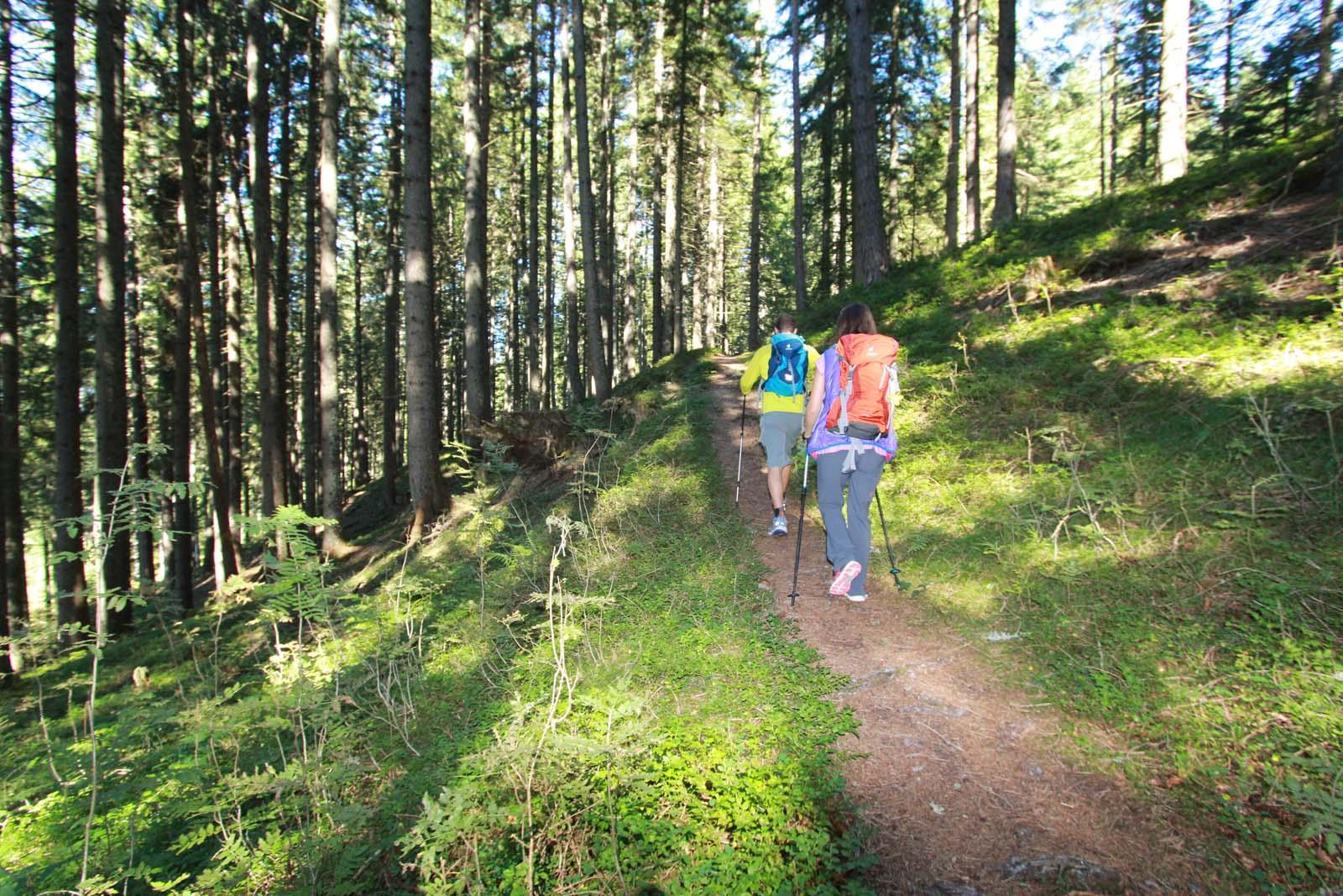 walking in the forest of Altenmarkt-Zauchensee