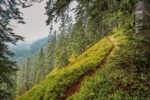 Wanderungen im Pongau Gerzkopf