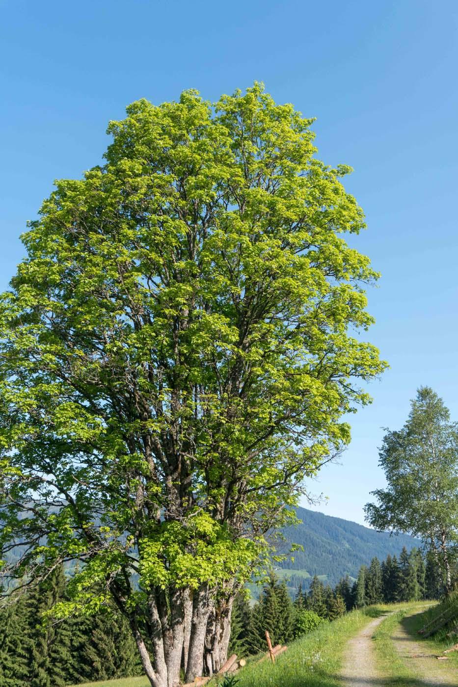 walk through the forest in Flachau