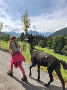 Alpakas in Salzburg