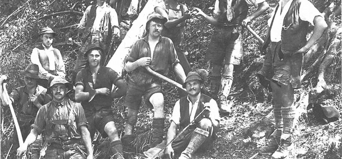 forestry in Austria a hundred years ago