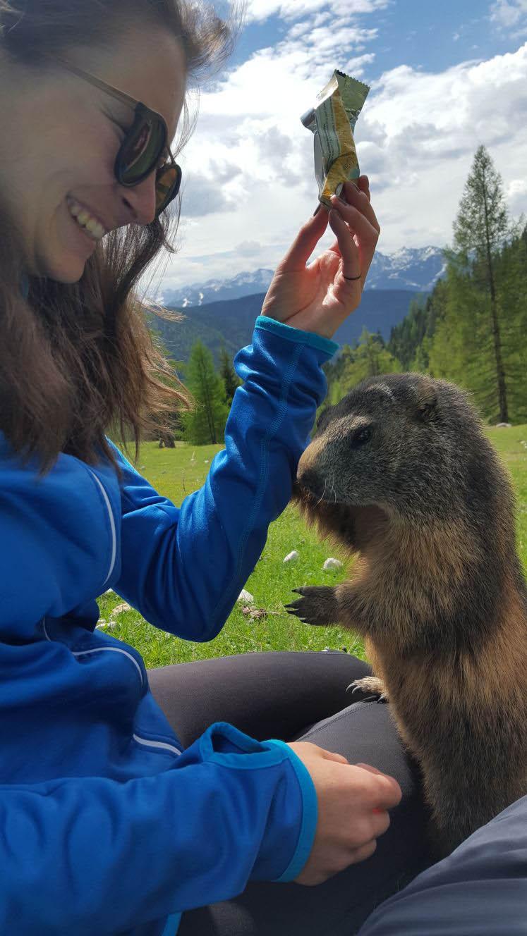 Visit marmots in Filzmoos