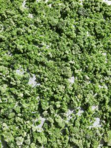 Bärlauchrezepte