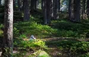 Natur genießen, Natururlaub, Wanderurlaub