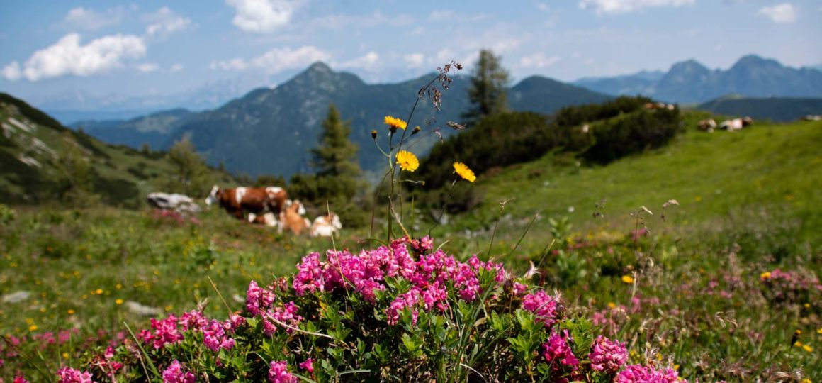 Hiking in the Salzburg Sportwelt