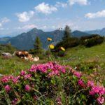 Wandern in der Salzburger Sportwelt