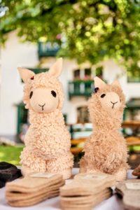 Alpakas in Salzburg, Alpakawanderungen in Salzburg