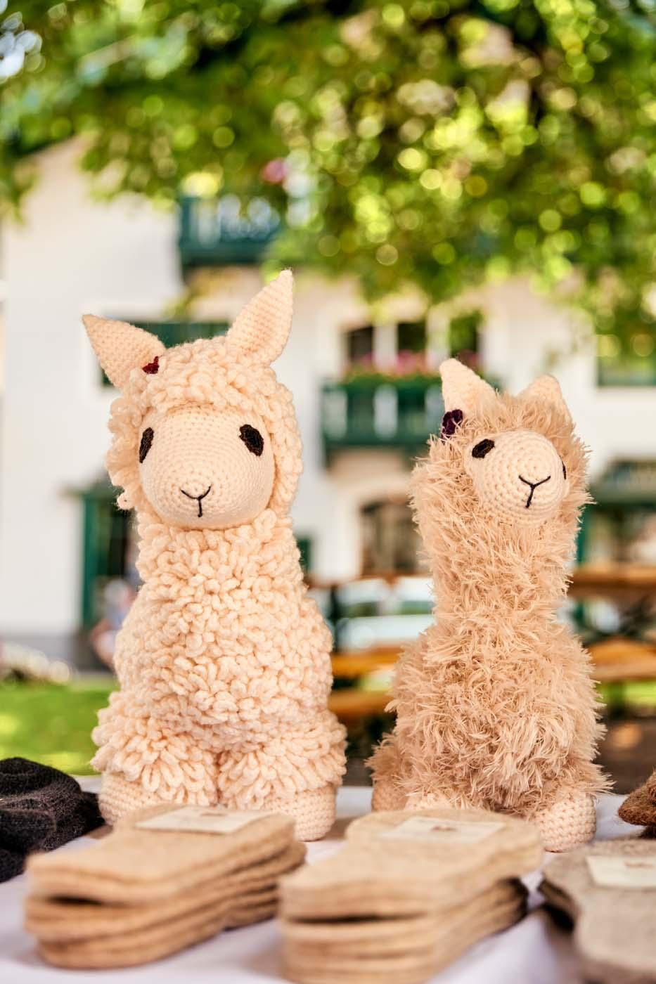 Alpacas in Salzburg, Alpaca hikes in Salzburg