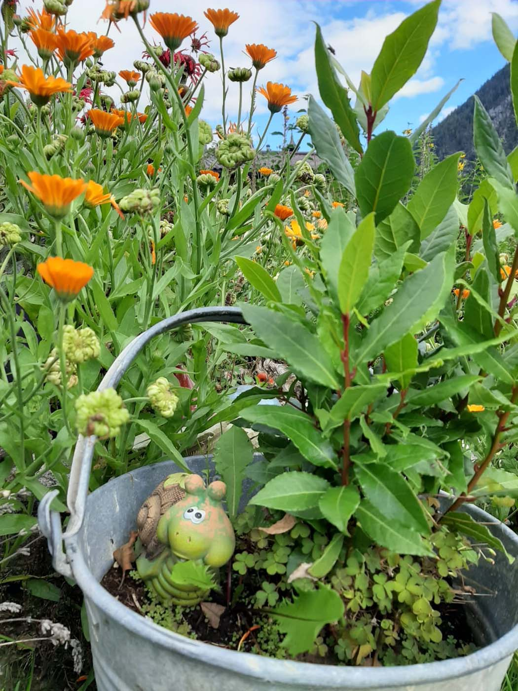 Pichlgut in Radstadt - the herb paradise