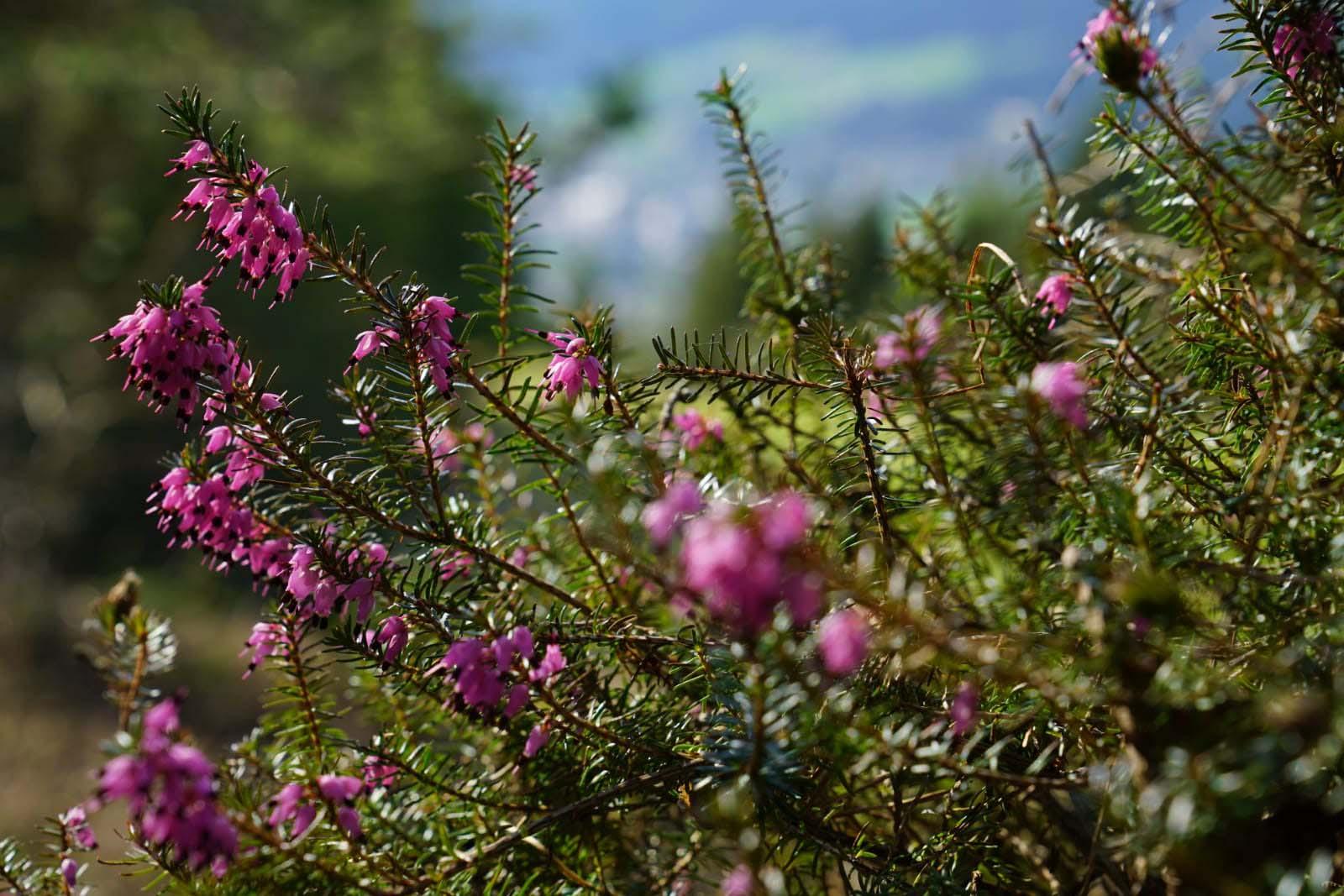 frische Blumen, neue Farben, der Frühling glänz in voller Prach