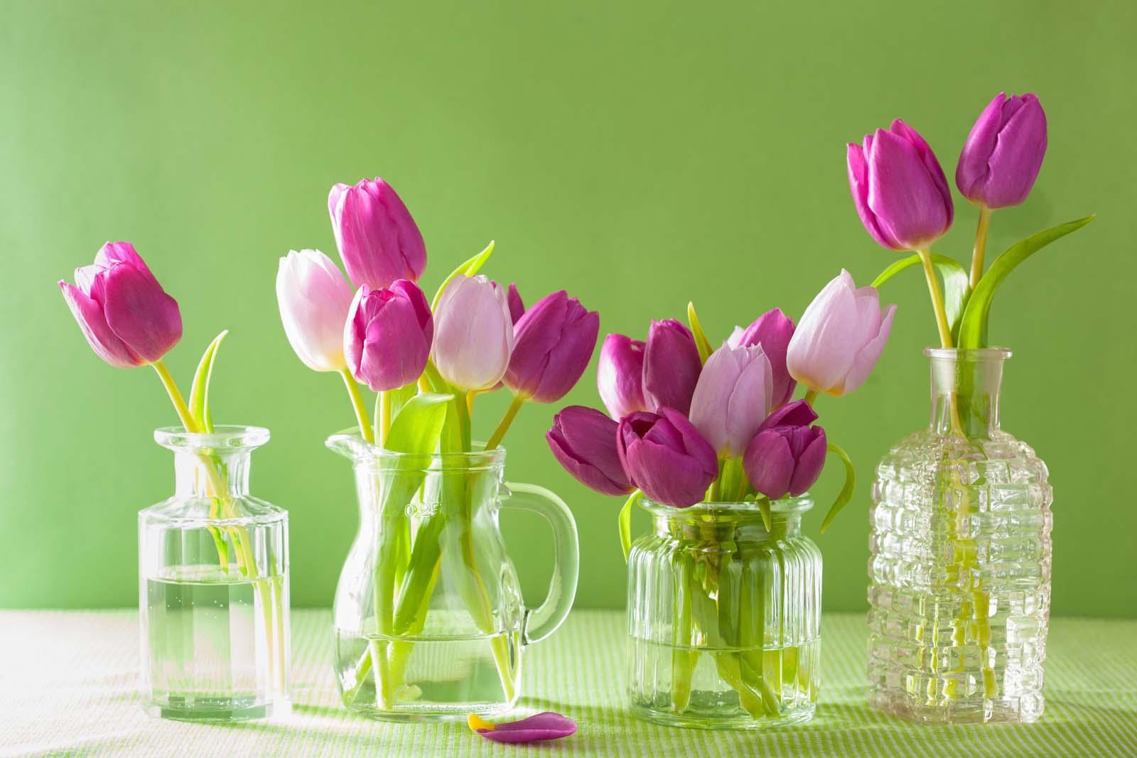 Frühling in den eigenen vier Wänden