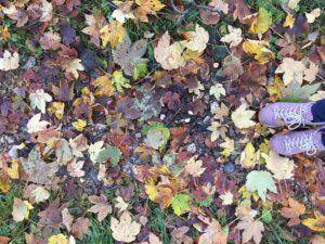 wunderschöner Herbstspaziergang in Filzmoos