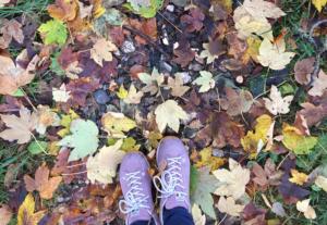 Bunte Blättervielfalt beim herrlichen Herbstspaziergang in Filzmoos
