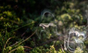 Der Duft des Waldrauches ist einzigartig und vielfältig