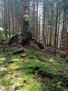 Erkundungstour nach Walddüften für den Waldrauch