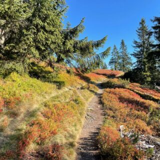 Follow your own path 😊. Maybe it leads directly to the mountain peaks? 🍁☀️🏔  #bloghuette #salzburgersportwelt #hiking #mountains #autumn #goodtimes #outdoorlovers #nature #explorenature #feelnature #happy #fun #timetogether #sports #mountainstories